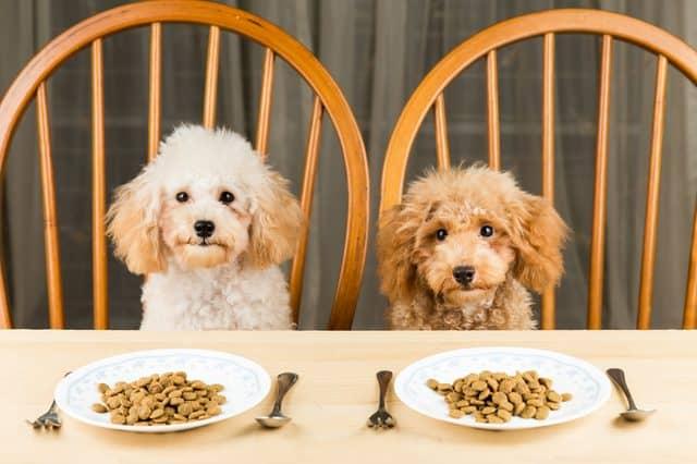 dog nutrition