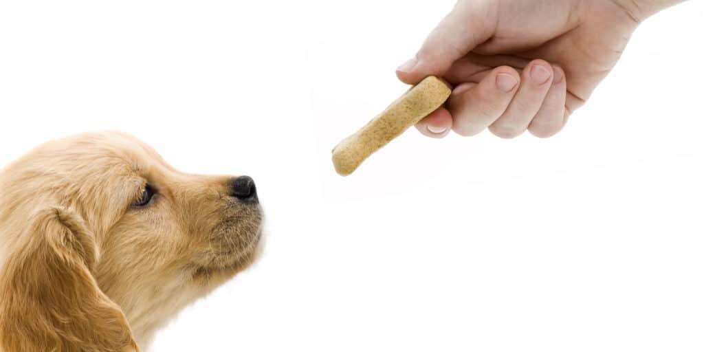 should you use dog training treats