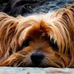 Holistic Approach To Dog Cancer Treatment