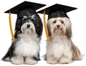 Online Dog Training VS. In Person Dog Training