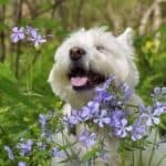 What You Need To Know About Aromatherapy For Dogs