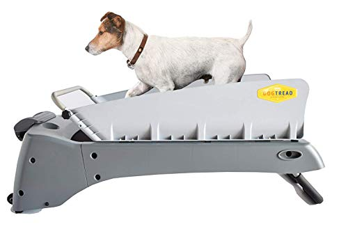 What Is The Best Dog Treadmill For Your Little Fur Baby To Run On? 7