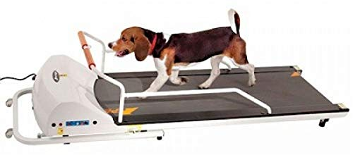 What Is The Best Dog Treadmill For Your Little Fur Baby To Run On? 10