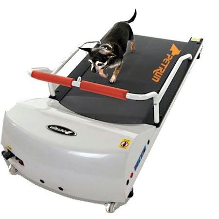 What Is The Best Dog Treadmill For Your Little Fur Baby To Run On? 4