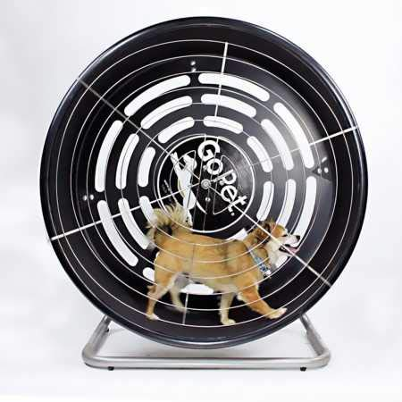 What Is The Best Dog Treadmill For Your Little Fur Baby To Run On? 12