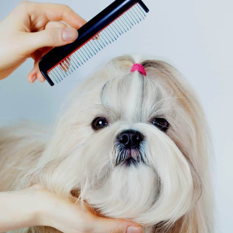 brushing and combing your dog
