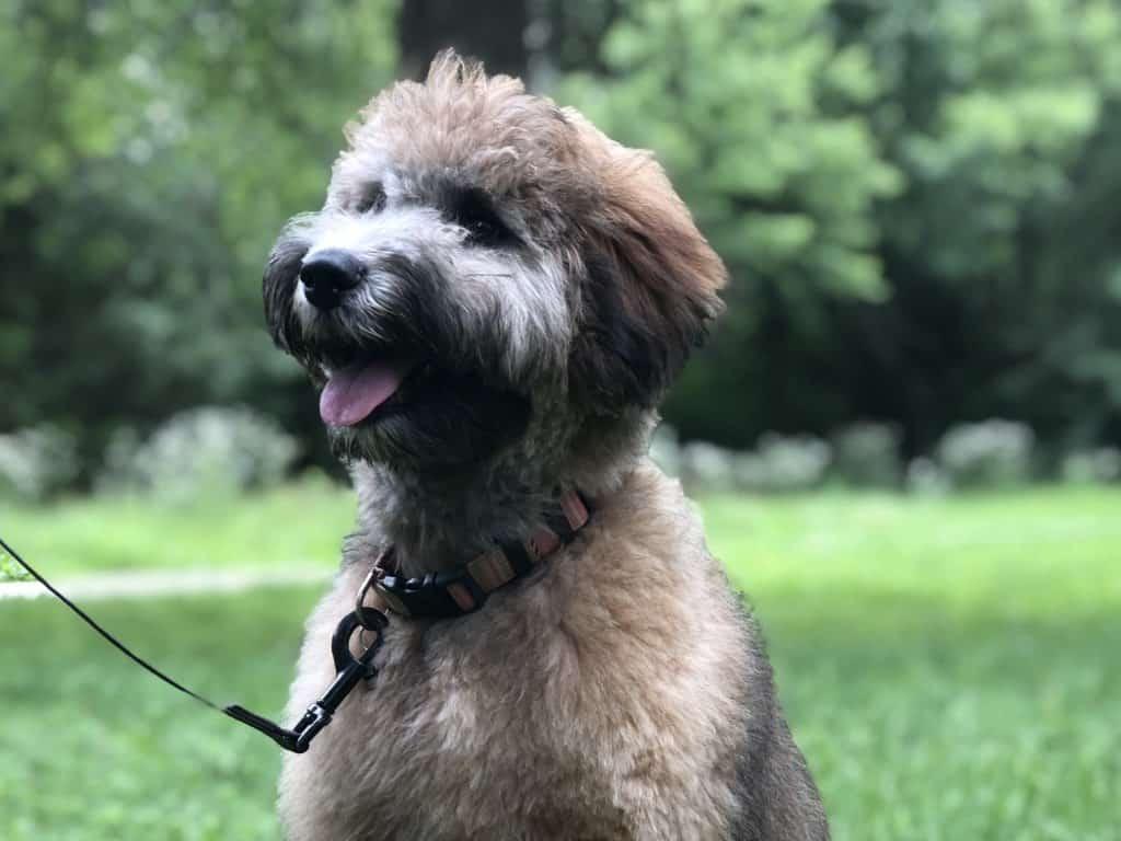 benefits of dog training