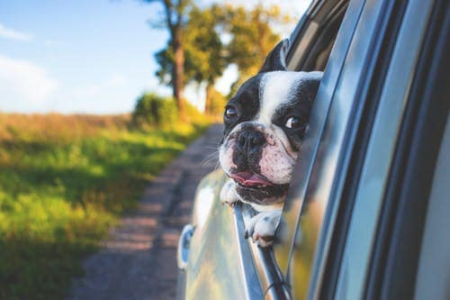 safety for dogs in cars