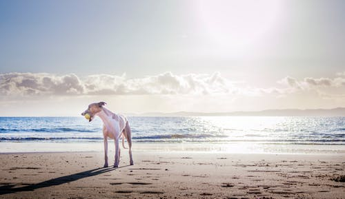 stress free travel for dogs