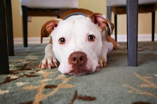 Pet-Proofing Your Home From Cables